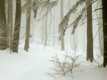 Misty winter forest, fresh snow and fog Stock Images