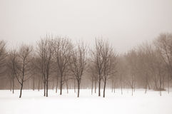 Misty winter landscape Stock Photos