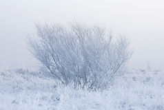Misty winter morning Royalty Free Stock Images