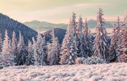 Misty winter morning in the mountain valley Stock Photo