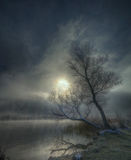 Misty winter morning. Was taken on a lake near Sofia, Bulgaria. Beautiful picture with tree, backlight and sunlit mist royalty free stock photo