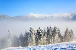 Misty winter mountain landscape Royalty Free Stock Photo