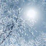 Misty winter picture Royalty Free Stock Photos