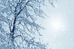 Misty winter picture stock image