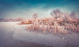Misty winter scene of the frozen pond in the city park. Stock Photos