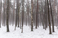 Misty winter trees landscape Royalty Free Stock Photos