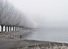 Misty winter trees with water stock images