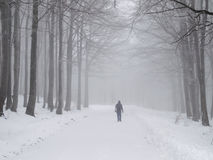 Misty winter walk Royalty Free Stock Photography