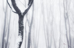 Misty winter woods Stock Image