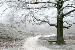 Misty Wintry Landscape And Oak Tree Royalty Free Stock Photo