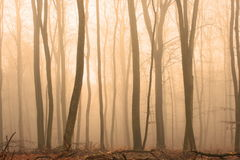Misty wood Stock Images