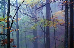 Misty Wood stock photos