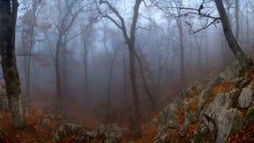 Misty wood Stock Photography