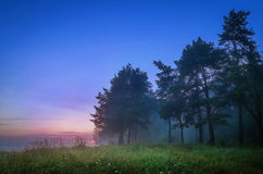 Misty wood and green meadow Royalty Free Stock Photo