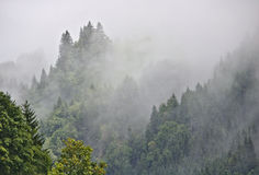Misty wooded valley in the Austrian Alps with half visible peak in the background Stock Photos