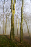 Misty Woodland Royalty Free Stock Images