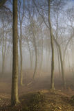 Misty Woodland Stock Images