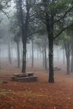Misty woodland with park benches Stock Photos