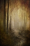 Misty woodland path. Heavily textured and toned image of a misty and mysterious looking woodland path stock photography