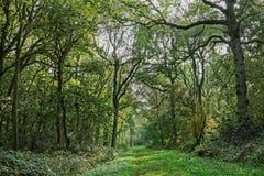 Misty Woodland Path Stock Photo