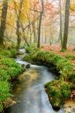 Misty Woodland Stock Image