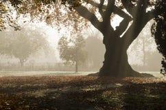 Misty woodland scene. Royalty Free Stock Photo