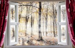 Misty woodland though an open window. Whispering woodland viewed through an open window with red curtains during a cold autumn morning. Mist and fog slowly waft Royalty Free Stock Photo