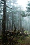 Misty woods Stock Photography