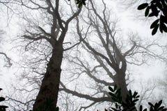 Misty Woods Royalty Free Stock Image