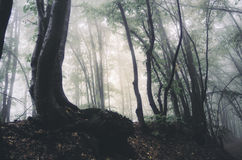 Misty woods Royalty Free Stock Image