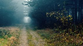 Misty woods. A misty walk to remember Stock Photo