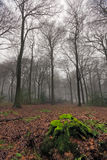 Misty woods in winter Stock Image