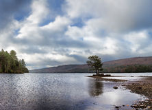 Misty Wyman Lake in Maine late fall lone tree Royalty Free Stock Photo
