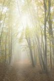 Misty yellow autumn forest Royalty Free Stock Photos