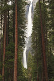 Misty Yosemite Falls through Forest Stock Photos