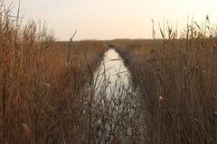 Mistyc rzeka Obrazy Stock