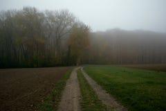 Mistyczna gęsta mgła na polu blisko lasu zdjęcie stock