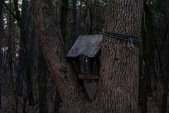 mistyczny birdhouse w lesie zdjęcie royalty free