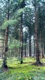 Mistyczny drewno szczegół Zdjęcia Royalty Free