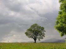 mistyczny drzewo Obrazy Stock