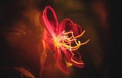 mistyczny kwiat Obraz Royalty Free
