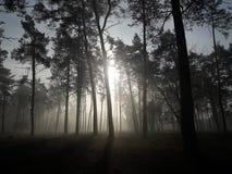 Mistyczny las w mgle Obrazy Stock