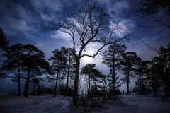 Mistyczny noc krajobraz zima las z okropnym drzewem przy centre Blask księżyca, czas zdjęcie royalty free