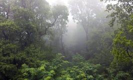 Mistyczny tropikalny las deszczowy zakrywający w mgle Fotografia Royalty Free