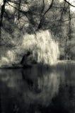 mistyk lake Obrazy Stock