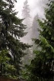 mistyk leśna obrazy royalty free