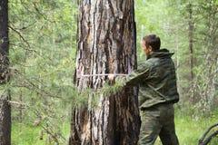 Misurazione del diametro di un albero immagini stock