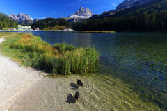 Misurina Lake in the Dolomites Royalty Free Stock Photography