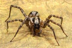 Mit Beinen versehene Spinne 6 Stockbild