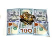 Mit Beinen versehener Frosch drei, der Glück amd Geld holt Stockbild